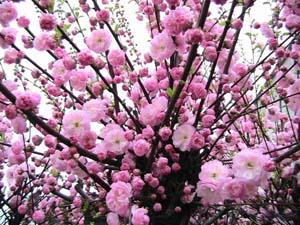 Как называются садовые кустарники: разновидности по сезонам и