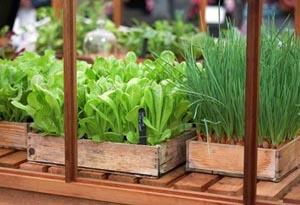 Вырастить вкусные и полезные овощи не